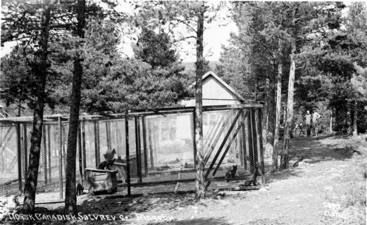 Ringebu. Norsk Canadisk Sølvrev co. Ringebu.