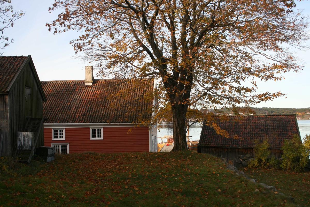 Merdøgaard, gårdstun sett fra S, fjøs og våningshus t.v. og sjøbod t.h.  Tunntreet, lønn, som skal beskjæres. Litt av Revesandsfjorden i bakgrunnen t.h.