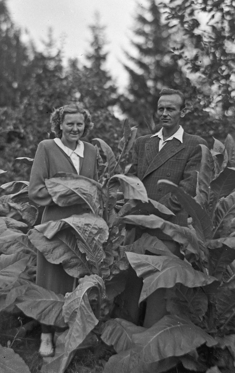 Mann og kvinne i hage/åker