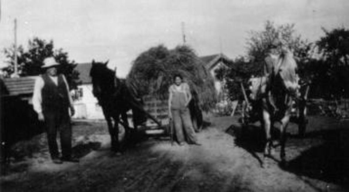Høyonn på Presterud, Helgøya. Høykjøring med hest. Even Presterud til venstre.