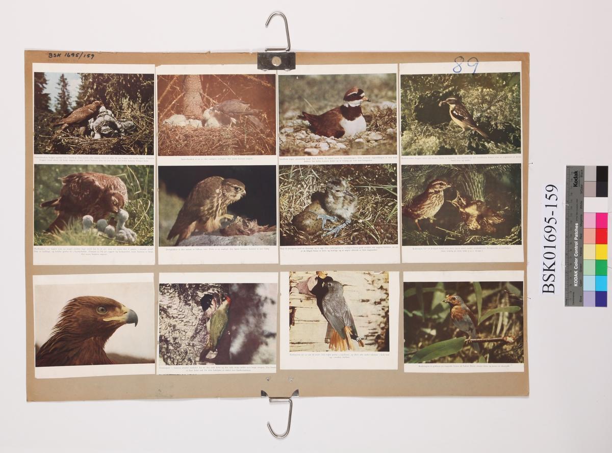 Diverse fugler i fotomontasje