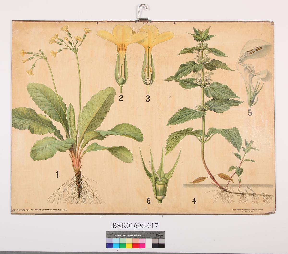 Blomster. Kusymre og dauvnesle