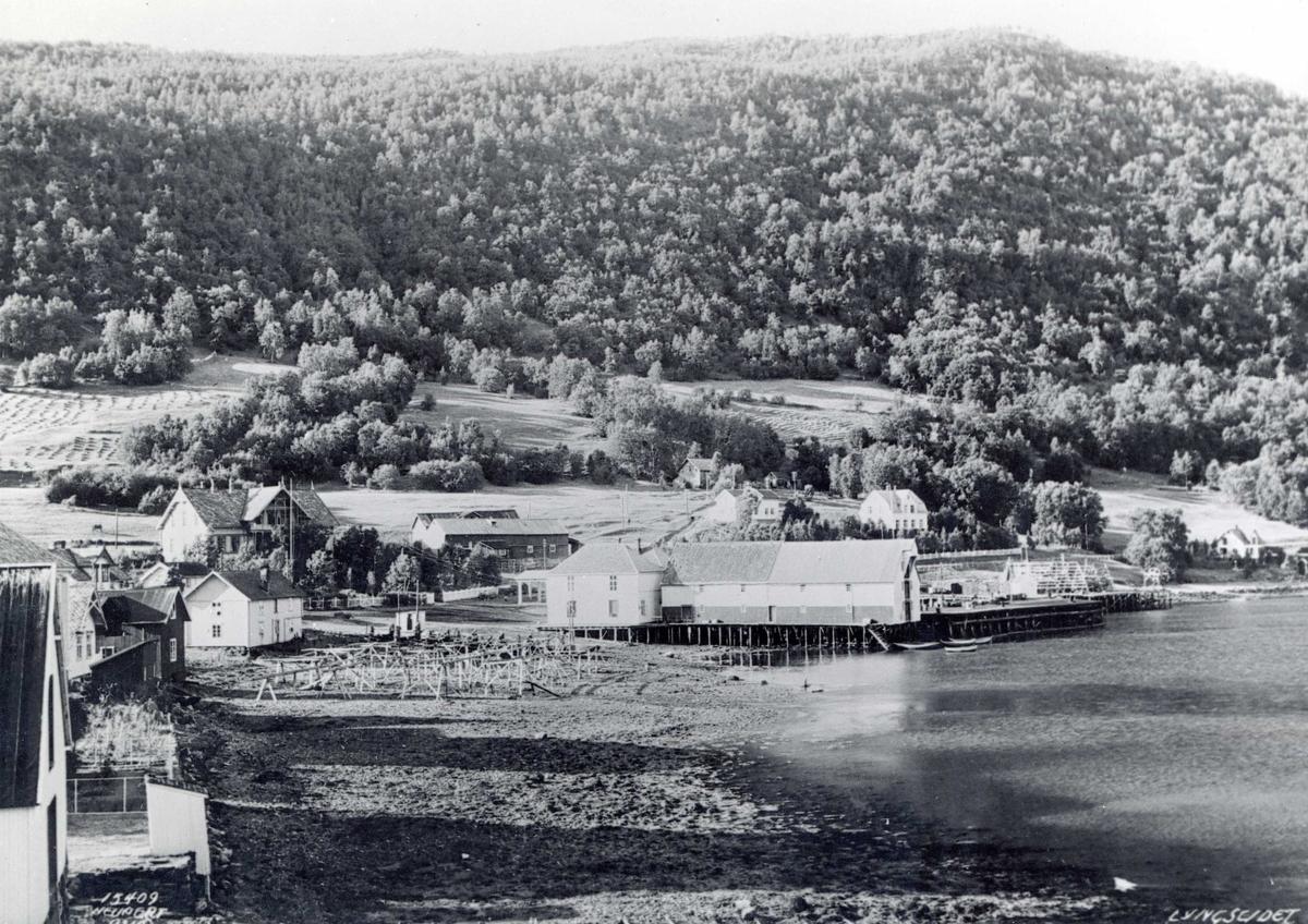 Lyngseidet i Troms. Brygger, fiskehjeller og slåttonn på jordene.