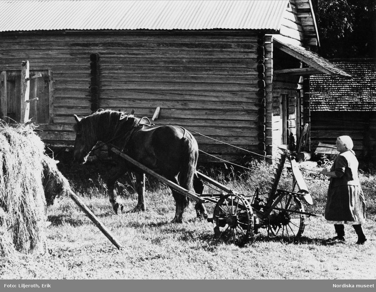 Häst kopplad till en slåttermaskin
