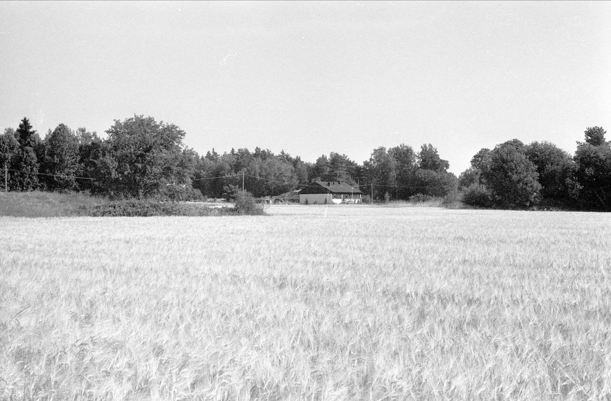 Vy över Alsta 10:2, Börje socken, Uppland 1983