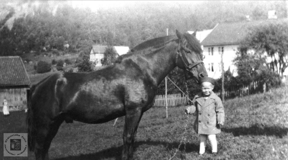 Hesten Rolf på Øvre Homme i Bjelland.