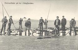 """Tryckt text på kortet: """"Ostronfiske på is i Stigfjorden"""". """""""