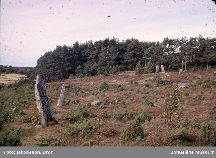 """""""Greby gravfält, resta stenar. Bautastenar vid Greby""""."""