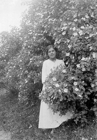 Kvinna i ljus, prickig klänning bakom blommande rosbuske