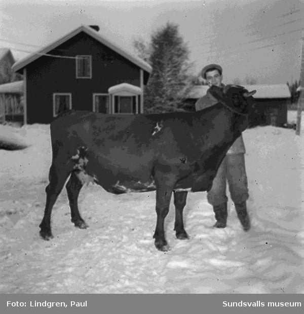 Bönderna Måns och Göran Andersson i Selånger. (Göran Andersson finns på bild 1, 4 och 5. Måns Andersson finns på bild 2 och 3).