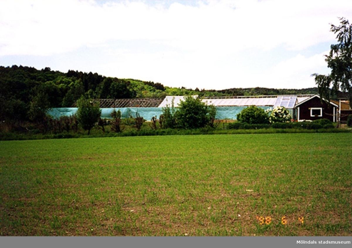 Ett växthus.Kålleredsgårdsvägen, Heljered 3:18, Apelgården i Kållered 1998-06-04.
