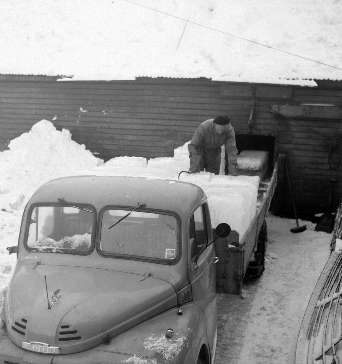 Isskjæring på Møkkelandsvannet, 1954. Her laster Asbjørn Berg, Kilbotn, isblokkene på lastebil før transport til kaia hos Bertheus Nilsen i byen.