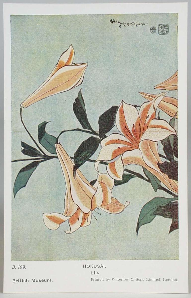 Kort B. 109: Lily Kort B 110: Dragon-fly and Kikyo flowers Kort B 111: The Bridge of Boats at Sano Kort B 112: The Lantern- Spectre Kort B 113: Maple-leaves on Tatsuta River Kort B 114: Girls in a boat on a lotus-pond