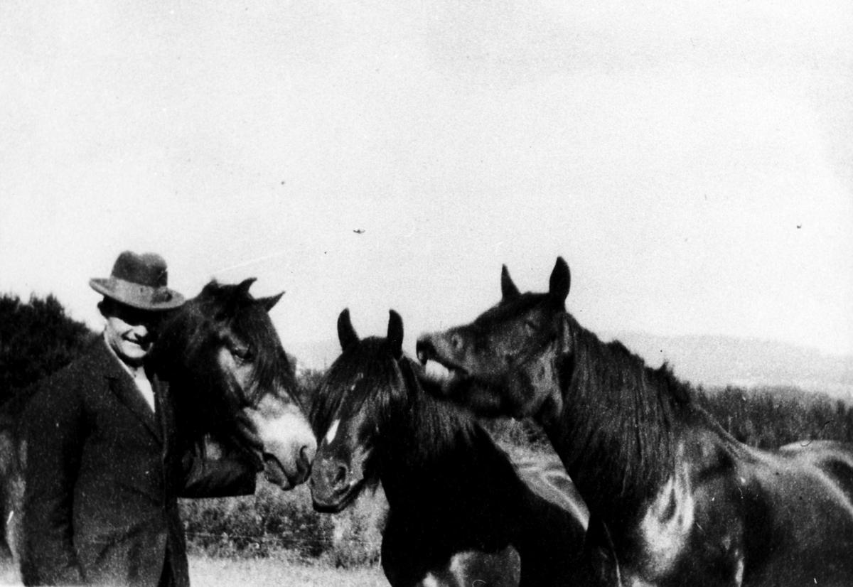 Mann med hester, gårdsbestyrer Nils Kleiven med hestene på Emma Hjort.