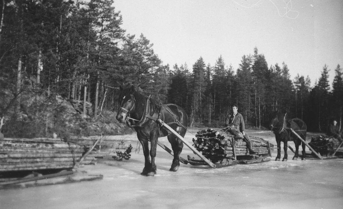 Tømmertransport med hest og geitdoning over islagt vann.