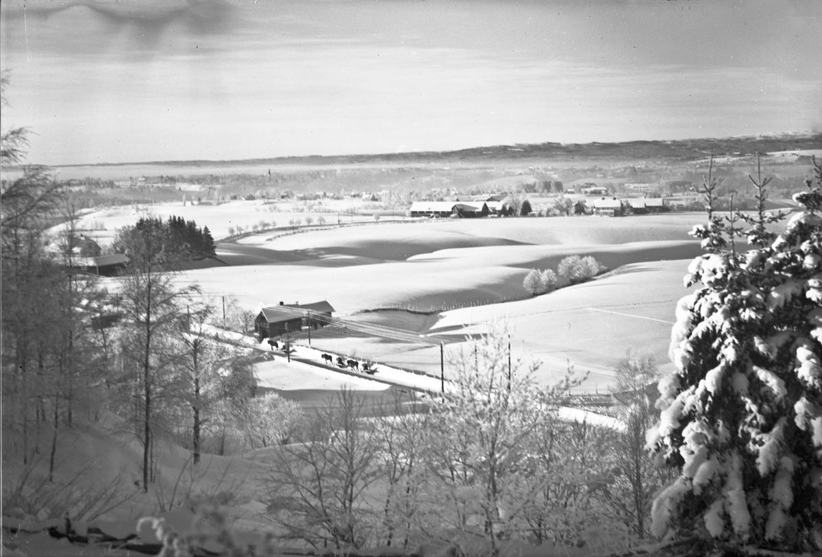 Hester med slede. På Skovseth - 2 km øst for Sundet. Huset i forgrunnen tilhørte Anna og Aksel Karlsen.