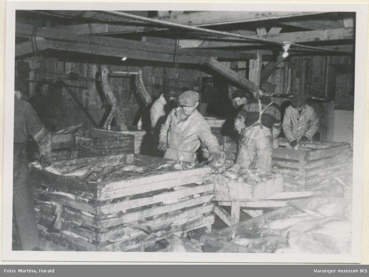 Fisken veies, sløyeskuret på Finotro, 25. januar 1956