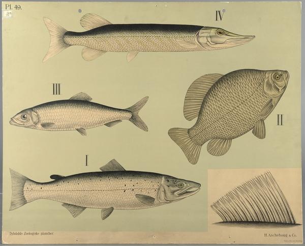 Mange fisk dating co UK login