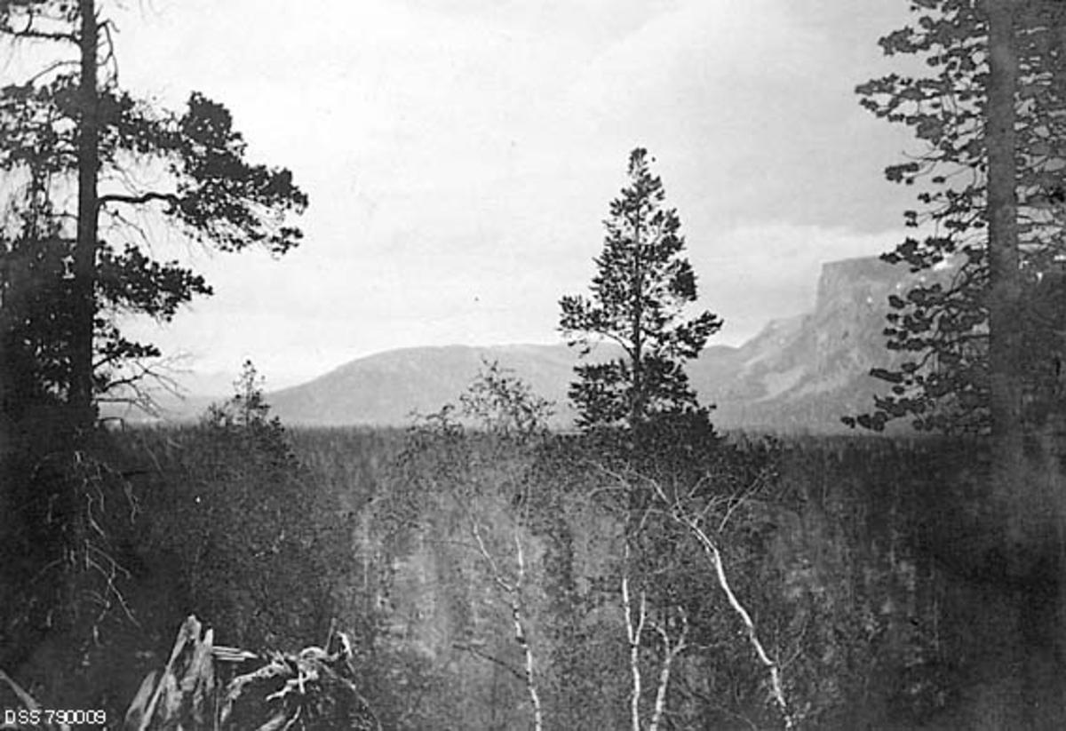 Landskapsbilde fra Eibymoene i Alta kommune i Finnmark, tatt sommeren 1906.  Fotografiet er tatt fra en bakkekam med ei rotvelte, et par store furutrær og noen mindre bjørker i forgrunnen.  I mellomgrunnen ser vi de nevnte Eibymoene og furuskogen som vokste der, og til høyre i bakgrunnen raget et fjell som på kartotekkortet fra den statlige skogetaten er er kalt «Beskades» mot himmelen.  Dette er muligens det fjellet som på moderne kart (2015) kalles «Beáskevarri».