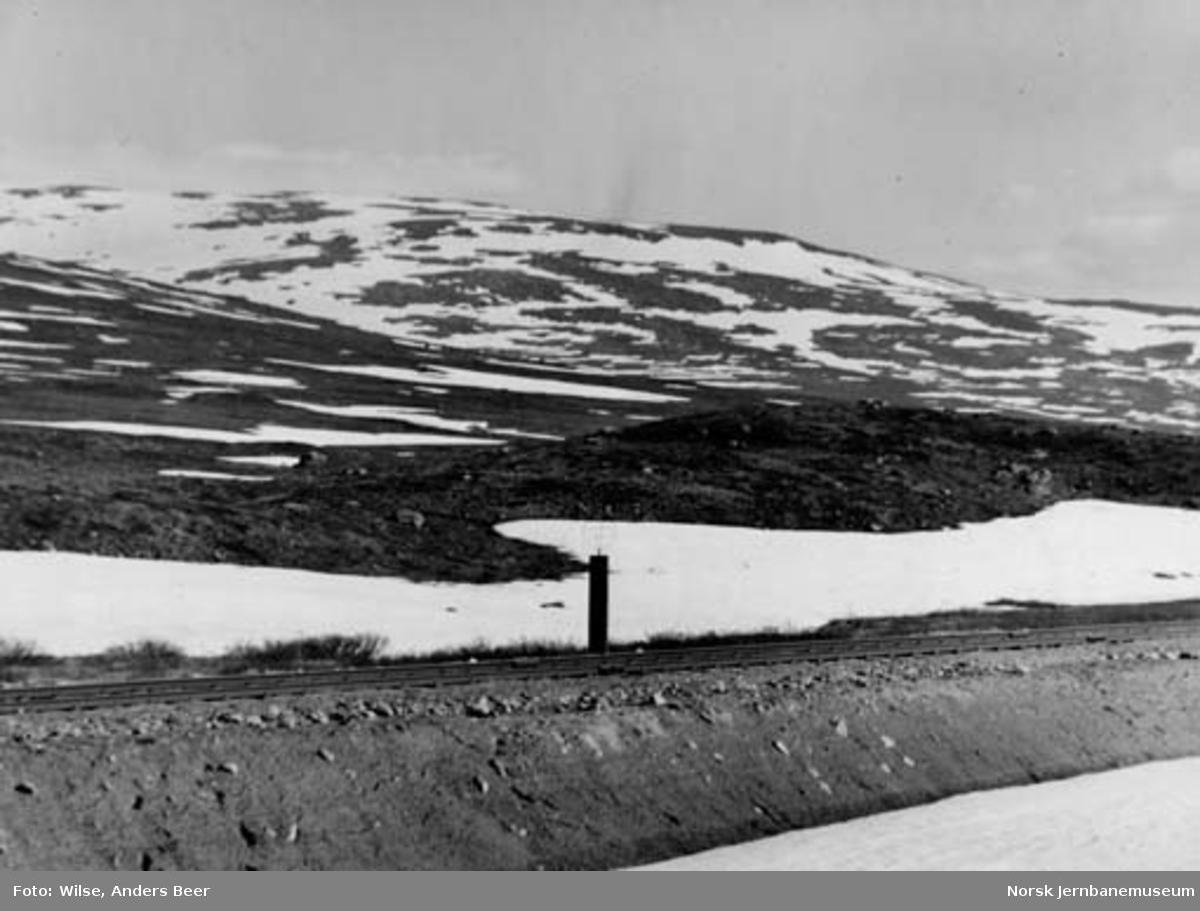 Linjen ved Polarsirkelen